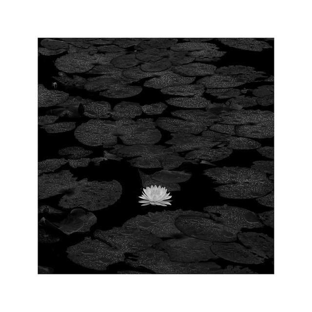 華 - fleur