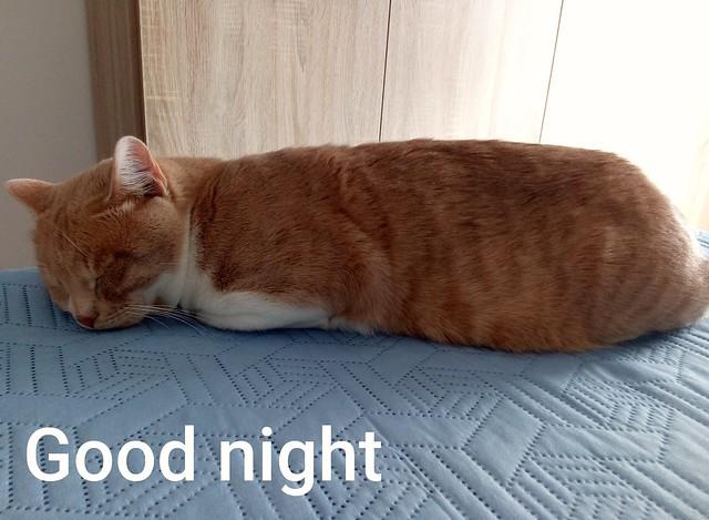 Good night dear friends ❣️