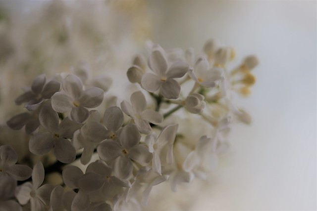 Heavenly scent