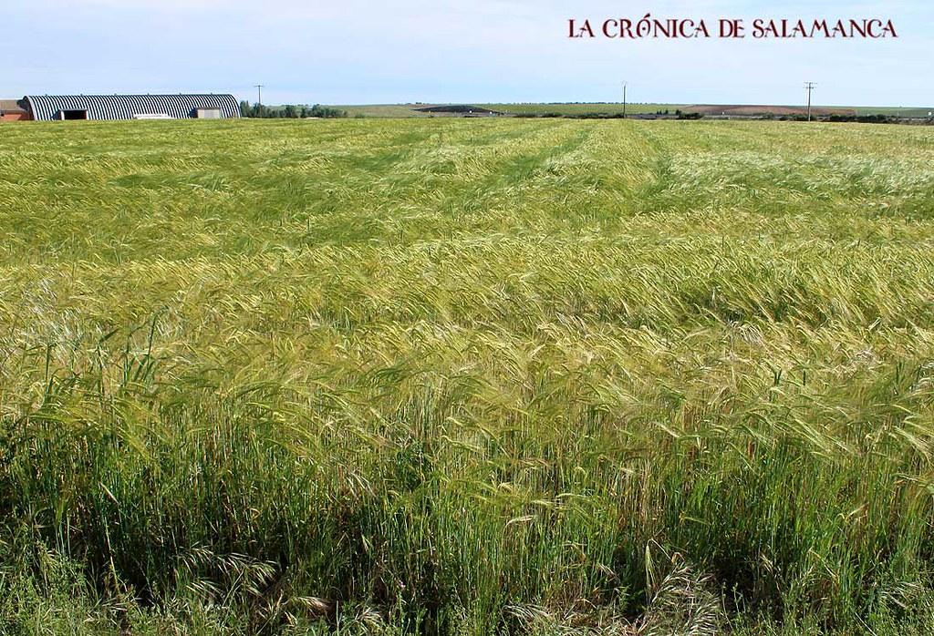 Cosecha_Cereal_Salamanca-(24)