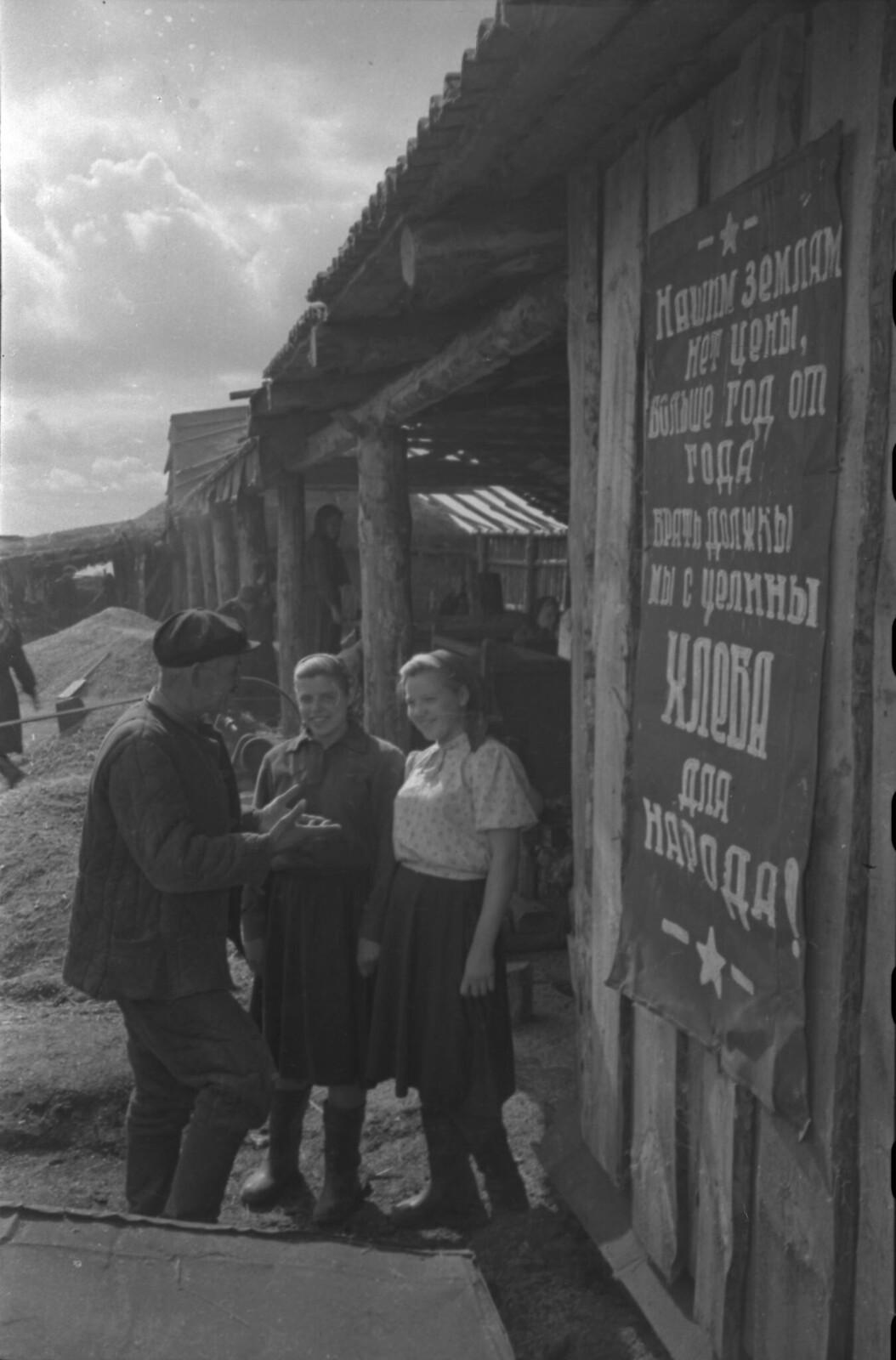 1956. Первый урожай целины