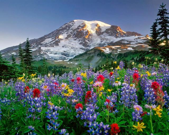paisaje florido