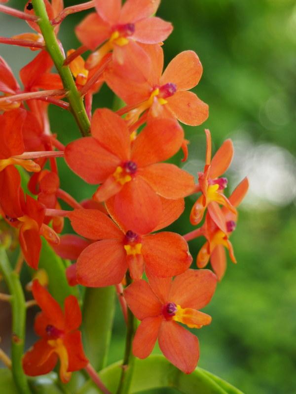 Les Orchidées chez Cloo en 2021 - Page 12 51194789615_cc88e29f9c_c