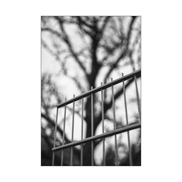 fine art fence