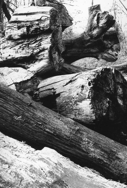 Nature morte (4)