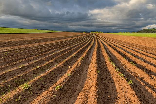 *Moseleifel - Landwirtschaft*