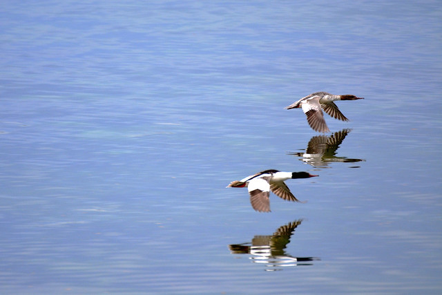 Birds on the loose - Reflection of Birds