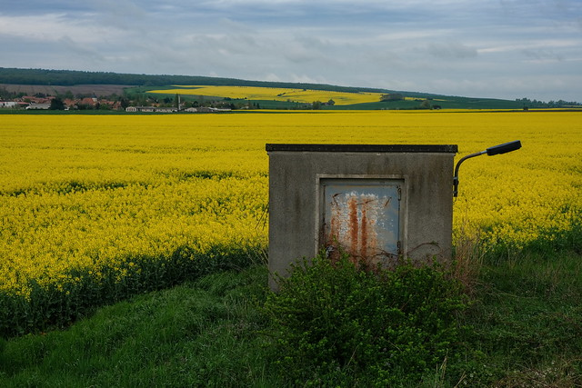 One-room apartment in the rapeseed field