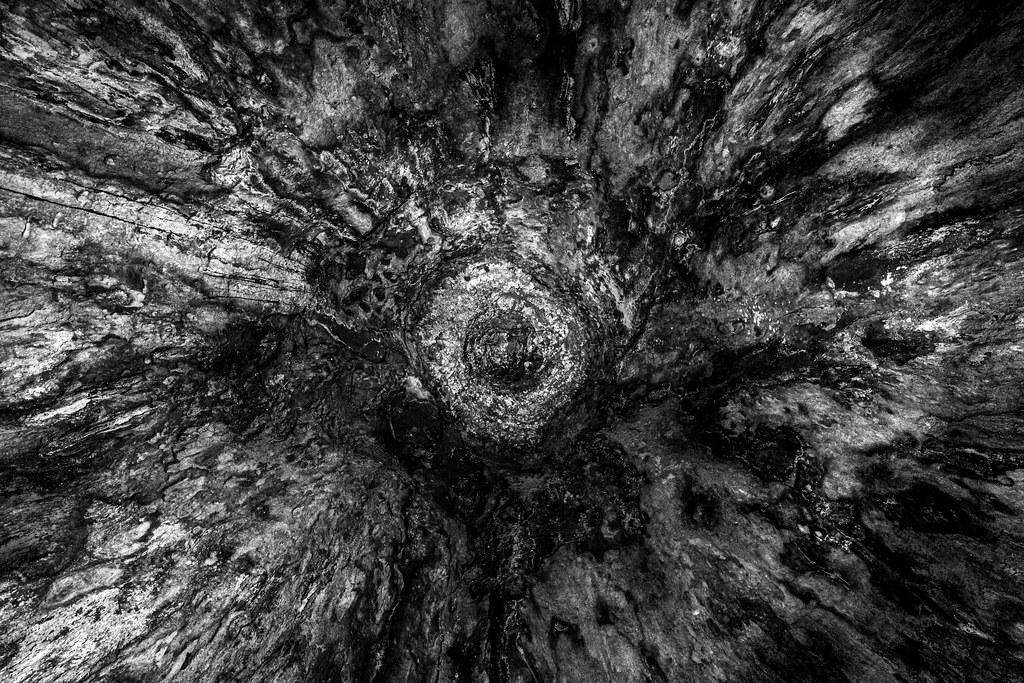 treeinside_new1-