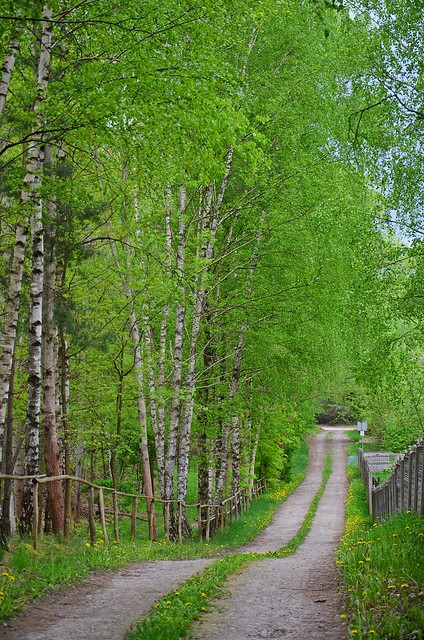 forest road :)