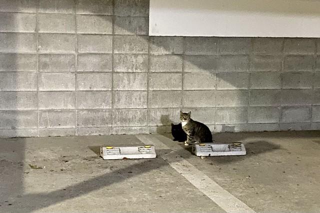Today's Cat@2021−05−22