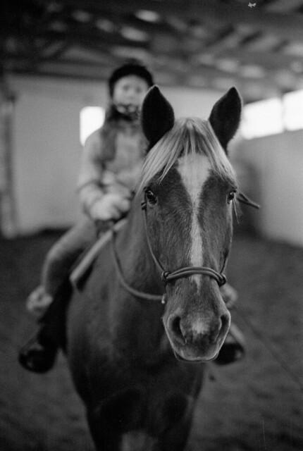 Horse Gaze