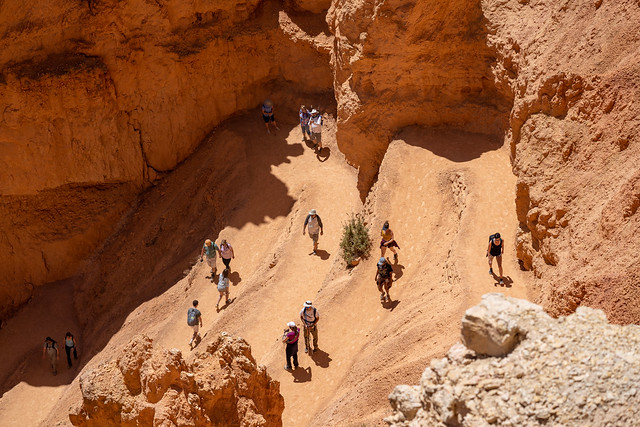 Utah, USA - May 15, 2021: Hikers tackle the switchbacks along the Queens Garden and Navajo Point loop trail in Bryce Canyon National Park