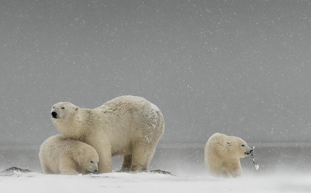 Let It Snow by Bob Rottenberg