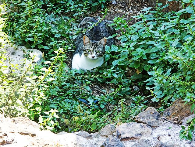 Cat of the Ancient Roman Ruins