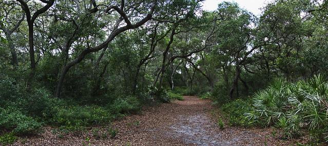 Florida Woodland: Hammock of sand live oaks.