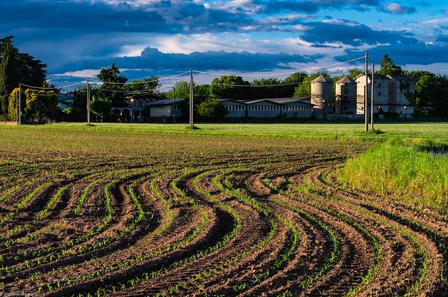 Nel campo delle onde agricole.