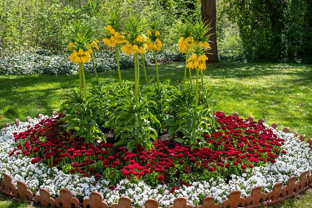 Berlin, Park Glienicke: Frühjahrsbeet mit doppelstöckigen gelben Kaiserkronen am Schloss - Spring flower bed with crowns imperial next to Glienicke Palace