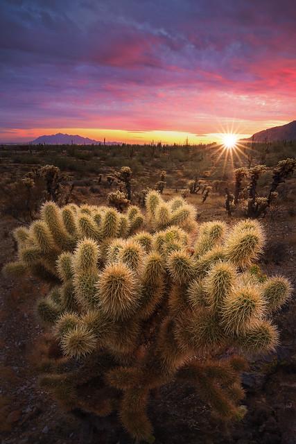 Arizona Spring