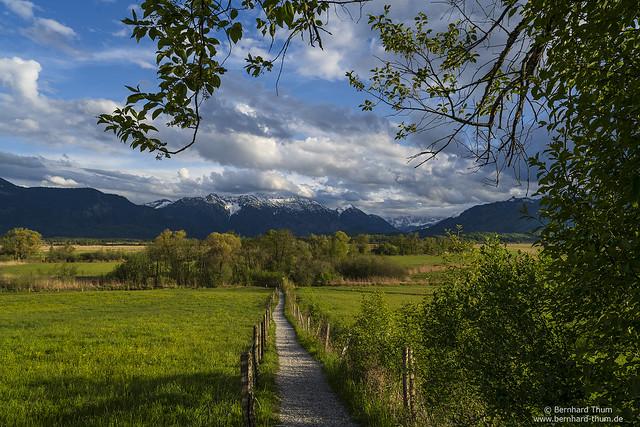 Spring at Murnauer Moos N°4