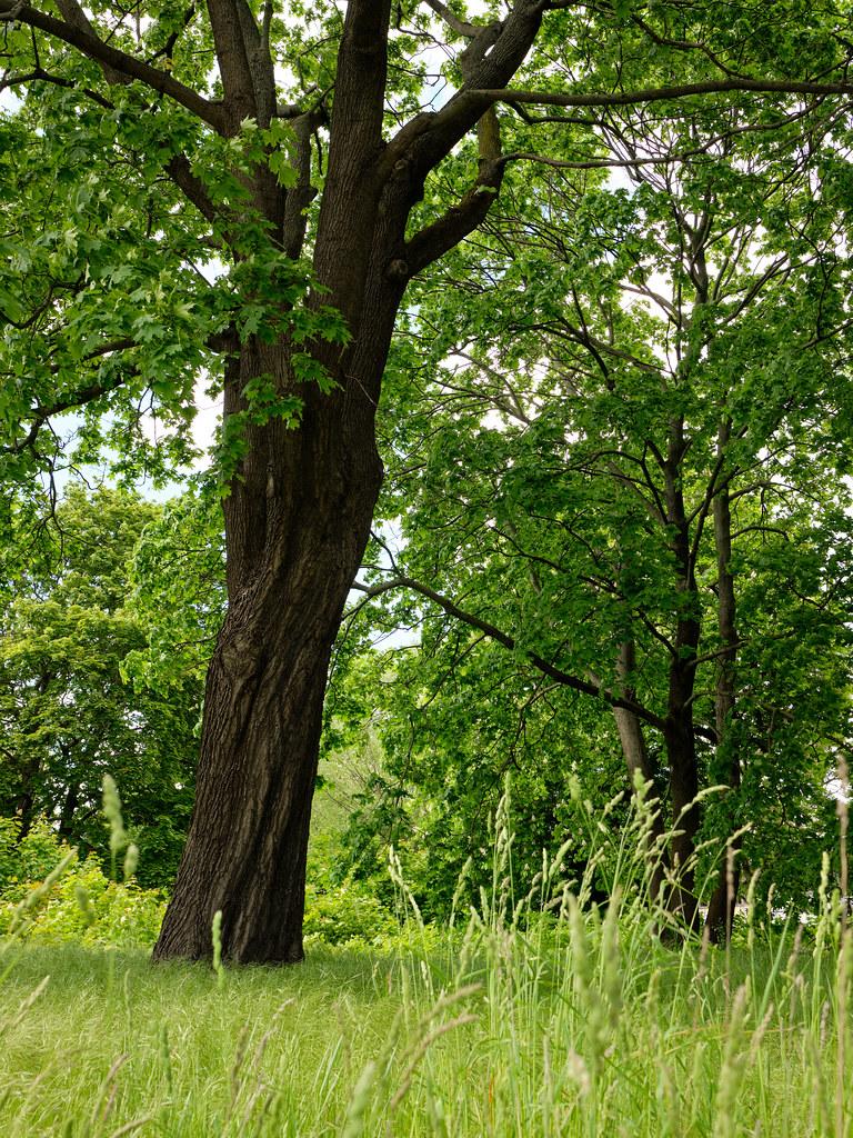 Baum im Grünen