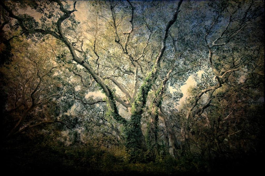 Wide Tree by Zoltan Puskas
