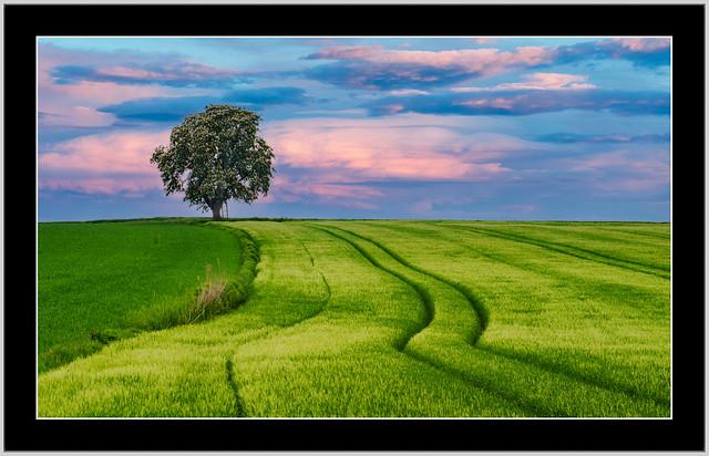 Einsamer Kastanienbaum inmitten Felder ! Landschaft gesehen nähe Rotthalmünster ! (Niederbayern)