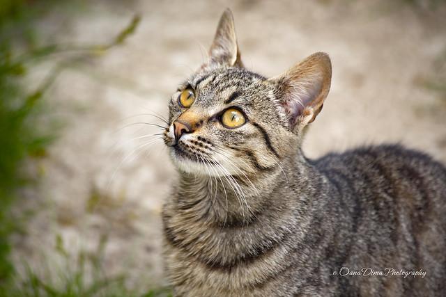 Jimi Cat