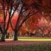 Thurston Park-9127