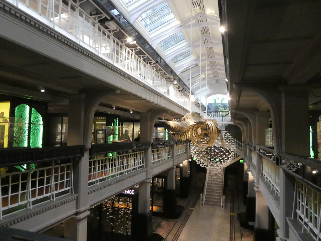 Interior of the Manchester Museum
