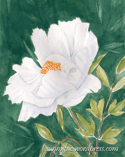 peony painted watercolour sketch 1