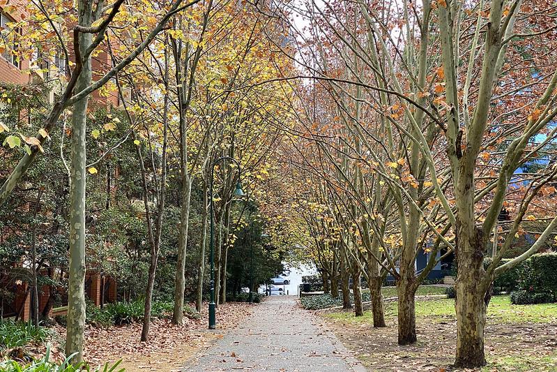 Late autumn path