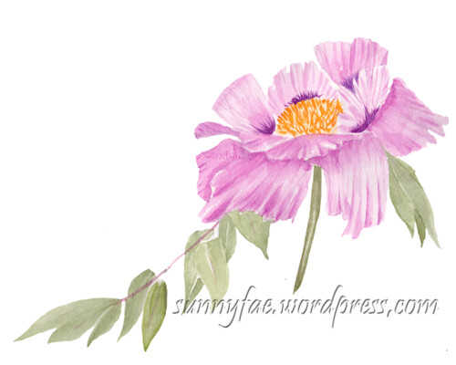 pink peony painted watercolour sketch