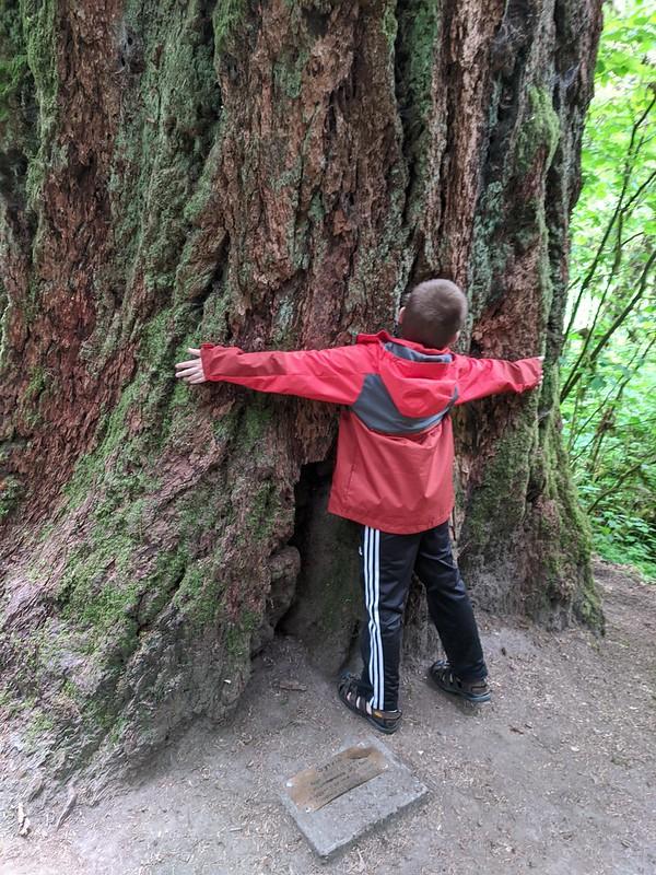 Benji Hugs Sylvia the Big Tree