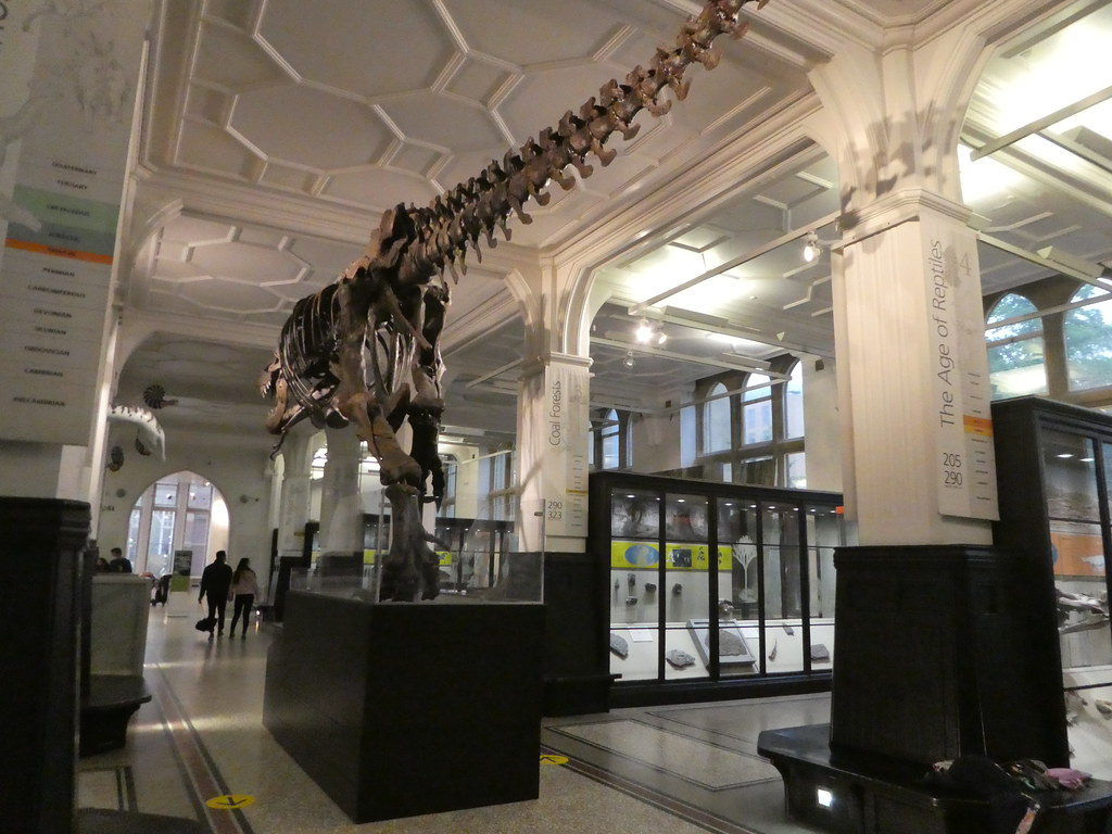 Dinosaur on display in Manchester Museum