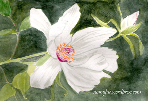 peony painted watercolour sketch