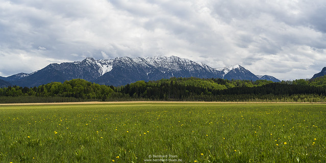 Spring at Murnauer Moos N°5