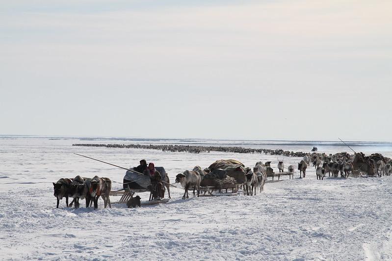 Pastoralism in development