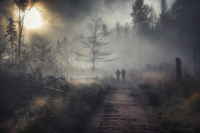Sehnsuchtsort Sächsische Schweiz - im Zauberwald