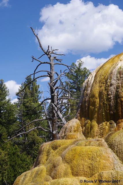 Orange Spring Mound