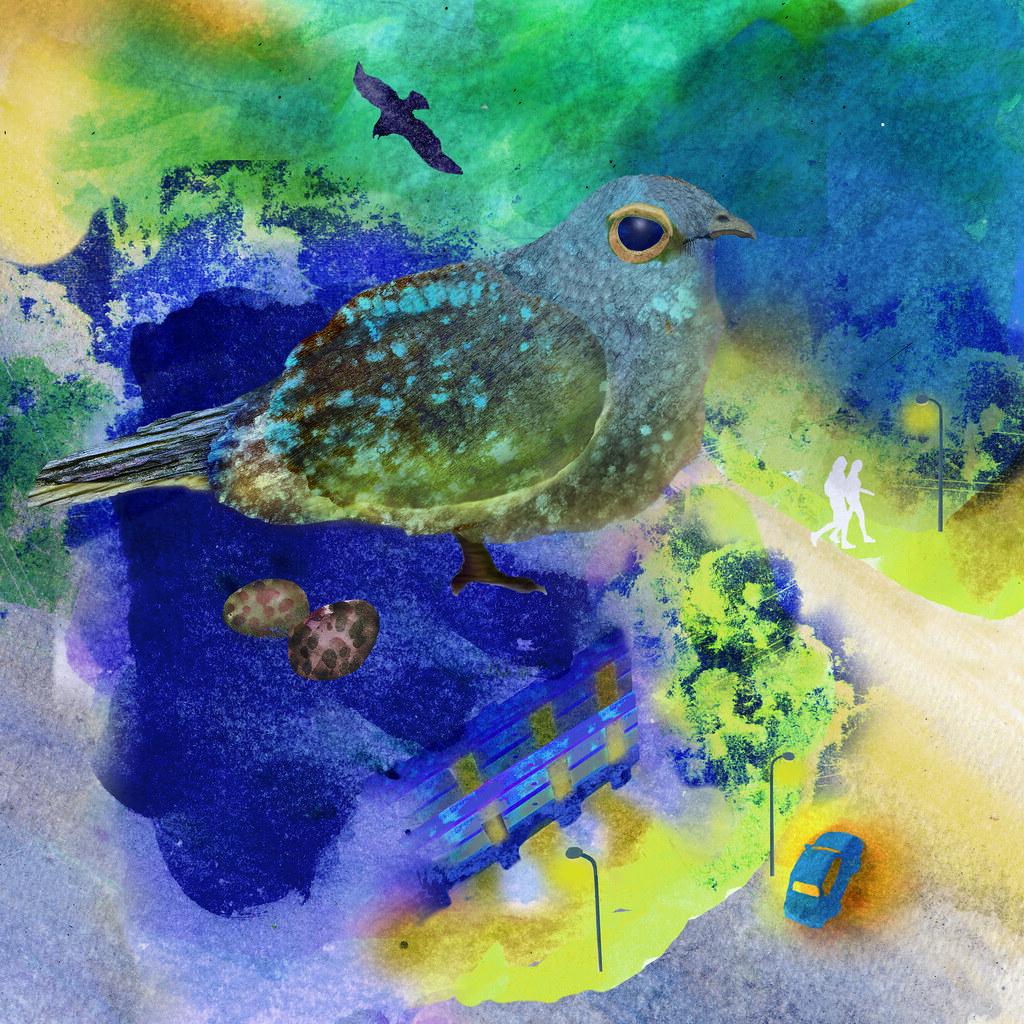 【生物多樣性的美好日常】都市裡的鳥朋友——台灣夜鷹