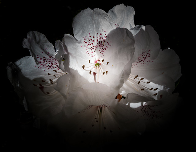 Flowers white on white
