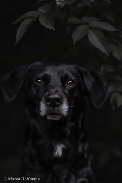 Mystical dog