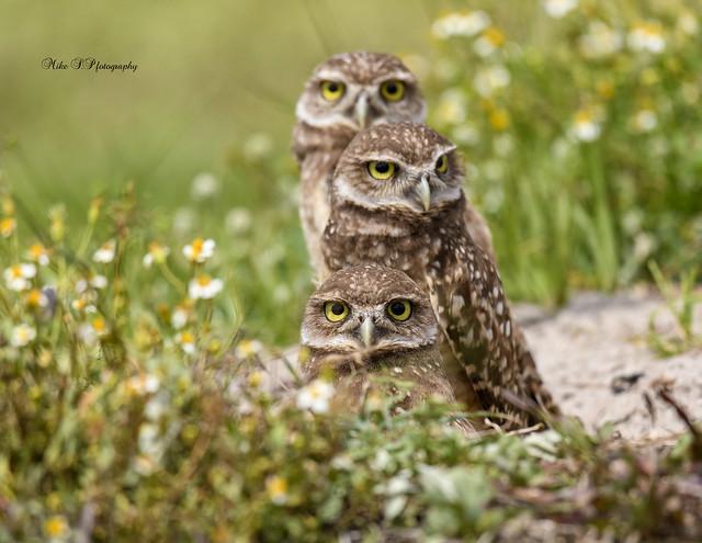 Three pair eyes