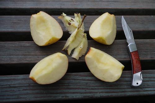 Aufgeschnittener Apfel (bei Rast auf Spaziergang um den Niedringhaussee)
