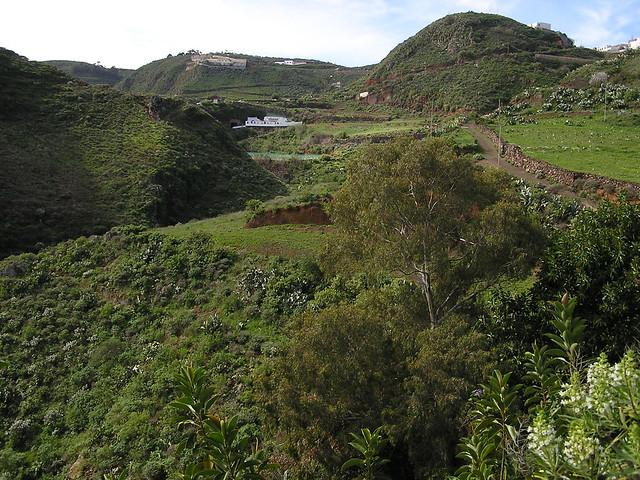 Senderismo Hoya Pineda Gran Canaria 12