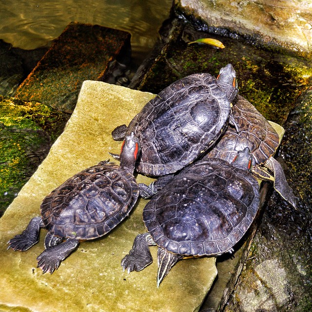 Allan Gardens Conservatory - Toronto Ontario - Canada - Turtles Pond