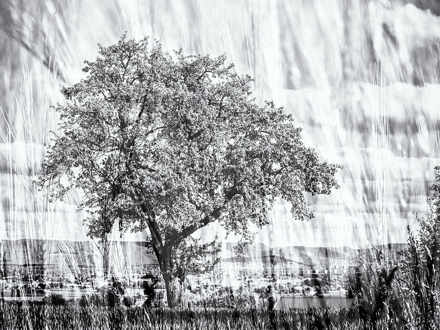 The Tree in the Field...