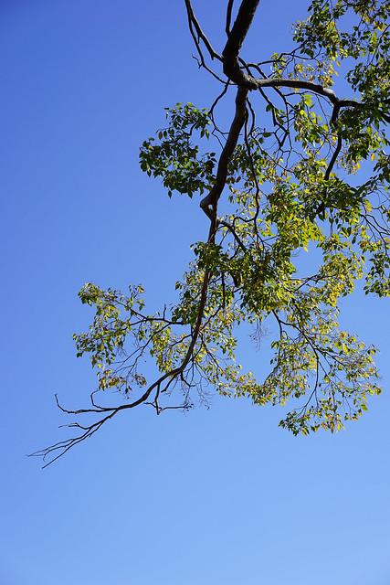 Blue sky above Kamogawa