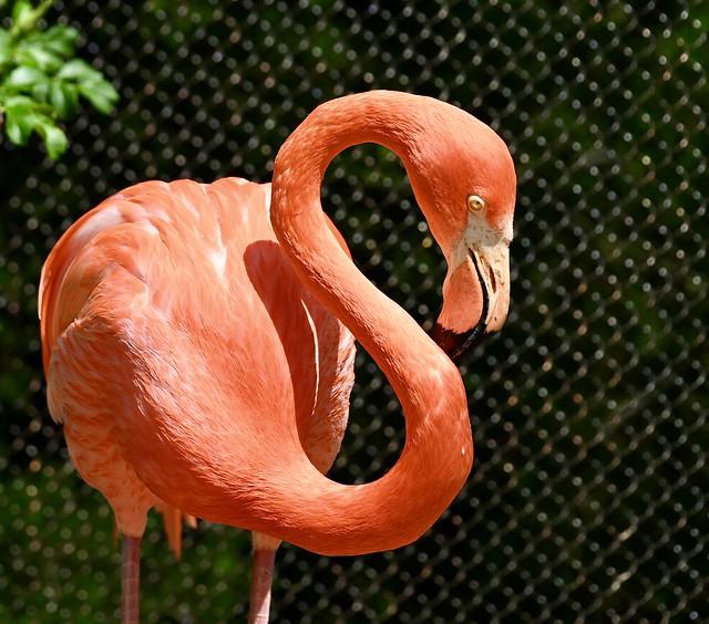 Flamingo yoga 5/23/21